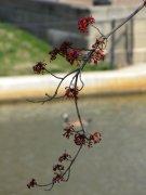 Tree in bloom on Brown's Island.