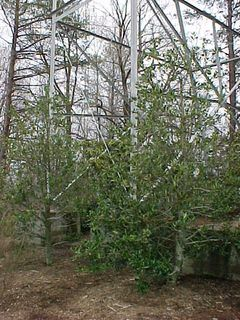 The footpads are hidden from view for the most part by trees and shrubs.