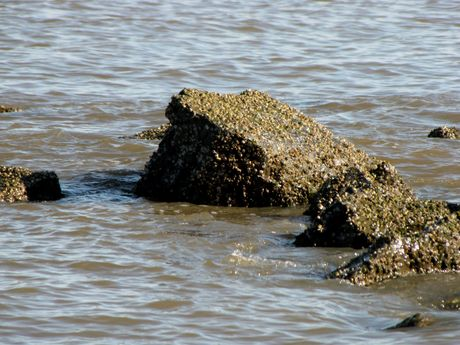 Barnacle-encrusted rocks in the water near the southeast corner of the park.