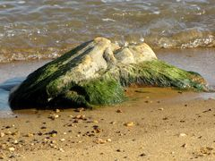 Rock covered with algae on its lower surfaces.