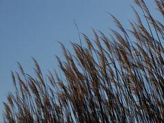 Grasses along East Beach.