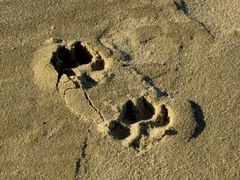 Dog pawprints in the sand at East Beach.