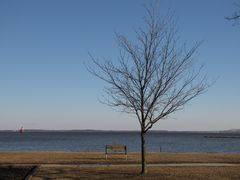 Tree and park bench at East Beach.