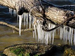 Icicles hanging from a downed tree limb at the northern end of East Beach.