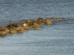 Rock jetty near East Beach.