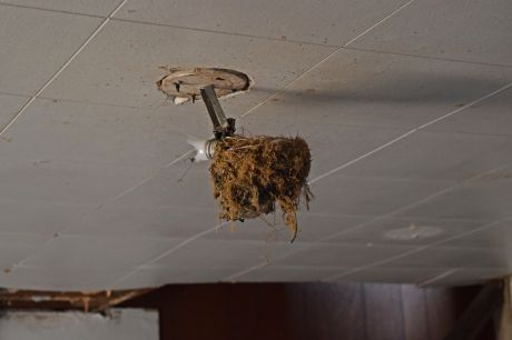 Light fixture in the living room, covered with some sort of growth