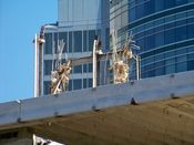 October 4, 2008: Steel beams and rebar protruding beyond the sixth floor slab.