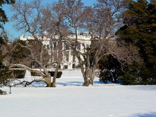 The first decent view of the White House is through trees... some are historic, attributed to specific presidents, and some are simply there.